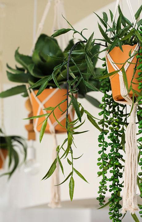 Zocalo Cocina Mexican & Cantina Hanging Plants, Restaurant Design - Valerie Legras Atelier